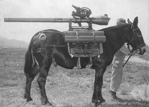 Animals Used In WW1