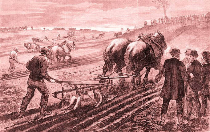 Ploughing Matches 1800's Australia