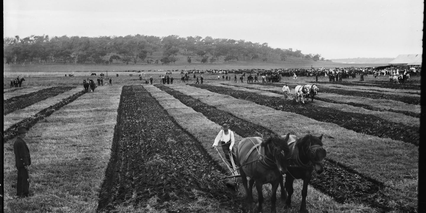 'Ploughing Match', Kerry and Co, Sydney, Australia