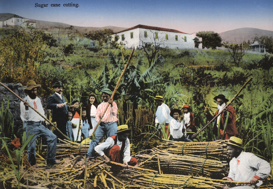 Madeira was the world's greatest producer of sugar